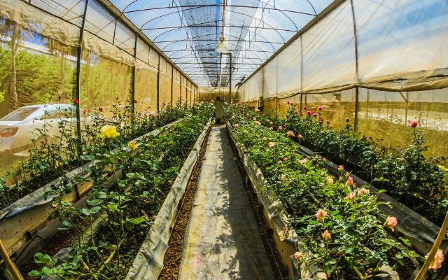 Mehr Transparenz bei der Zulassung von Pflanzenschutzmitteln