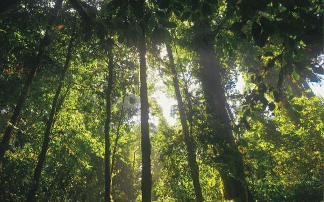 Zustand des Waldes