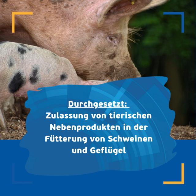 Tierische Nebenprodukte in der Fütterung